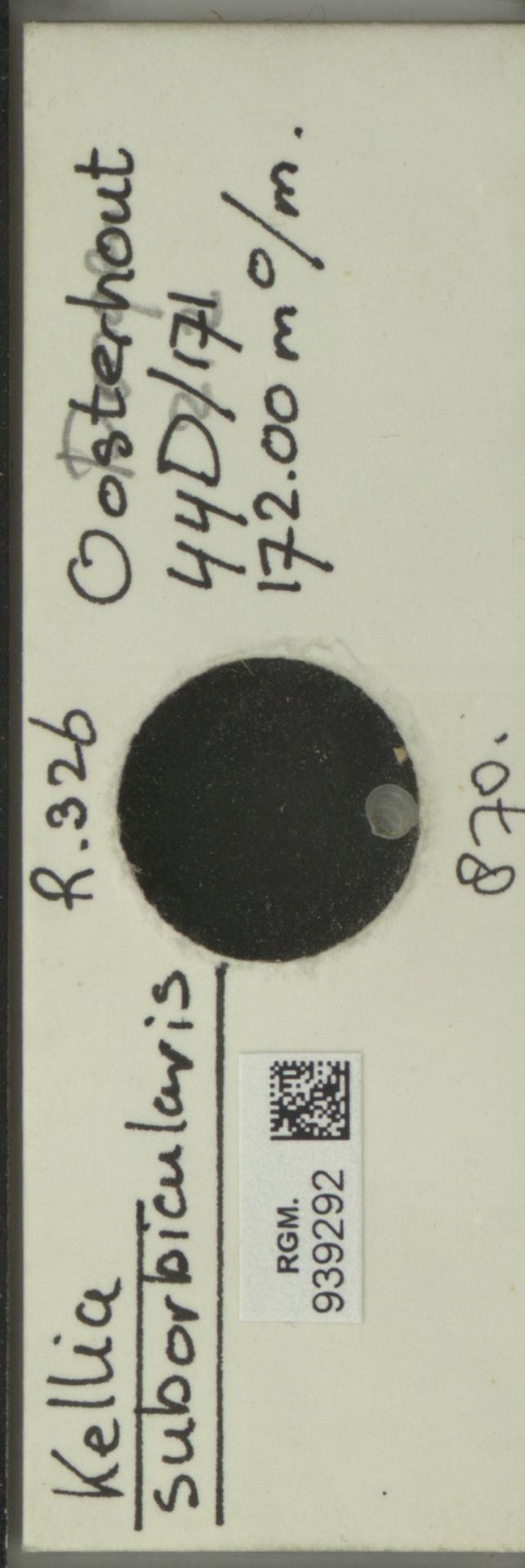 RGM.939292 | Kellia suborbicularis