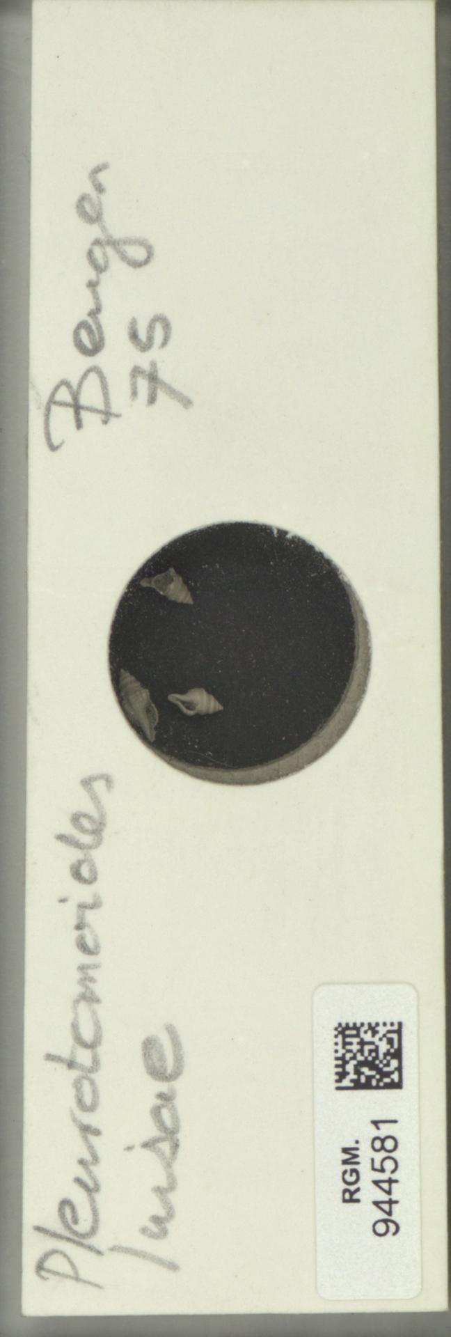 RGM.944581 | Pleurotomoides luisae