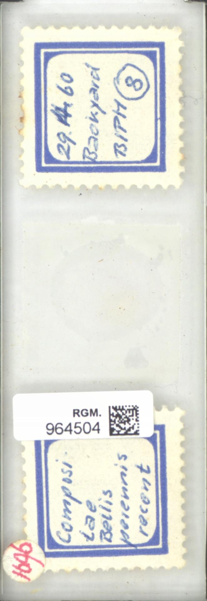 RGM.964504   Bellis perennis