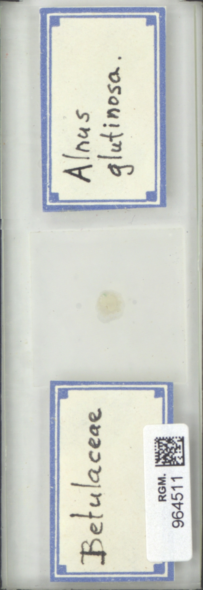 RGM.964511 | Alnus glutinosa