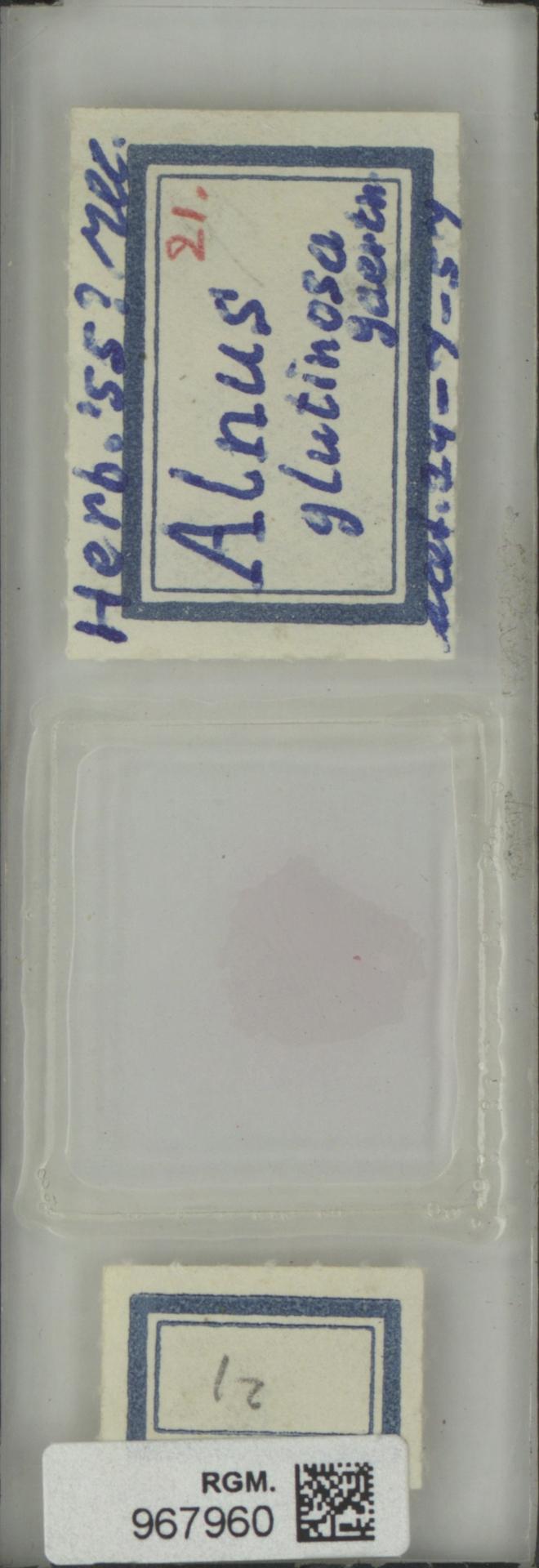 RGM.967960 | Alnus glutinosa