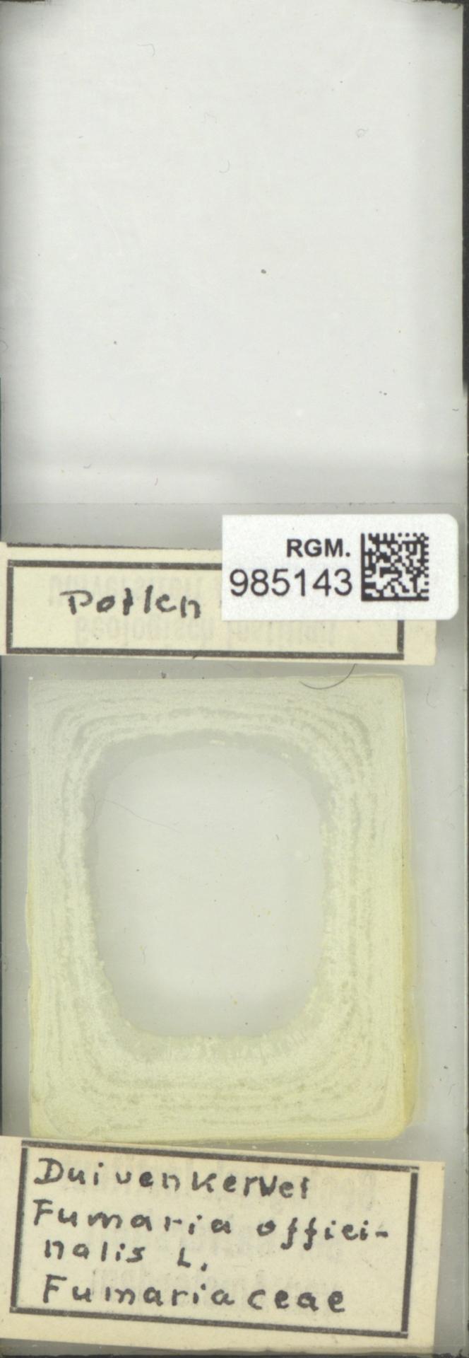 RGM.985143 | Fumaria officinalis L.