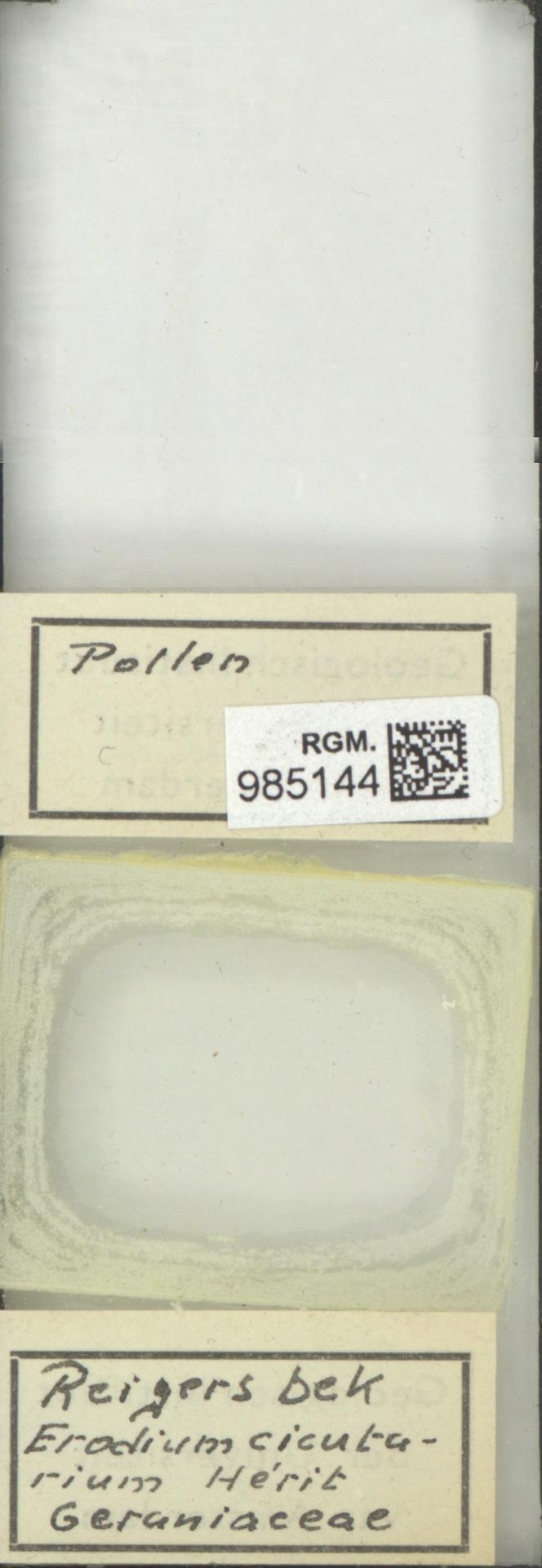 RGM.985144 | Erodium cicutarium Herit.