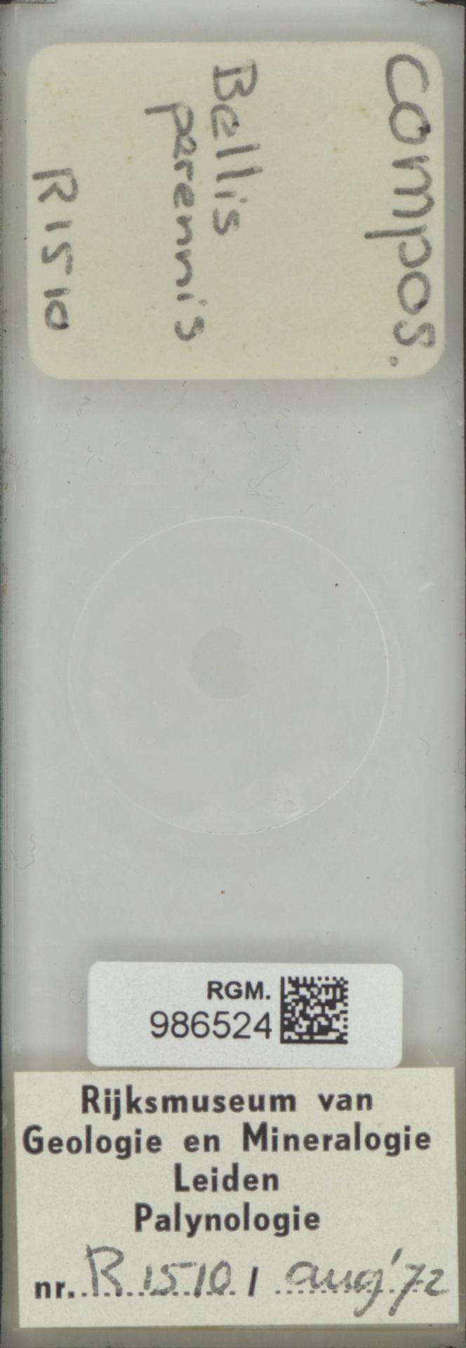 RGM.986524 | Bellis perennis
