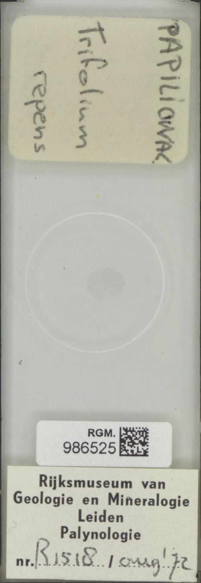 RGM.986525 | Trifolium repens
