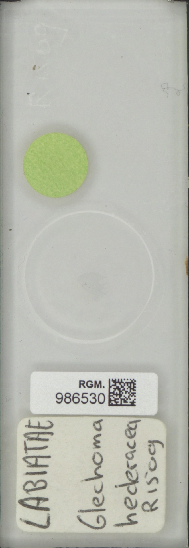 RGM.986530 | Glechoma hederacea