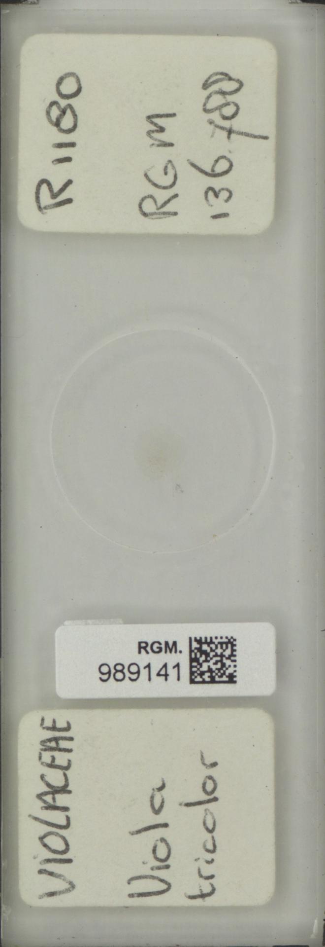 RGM.989141 | Viola tricolor