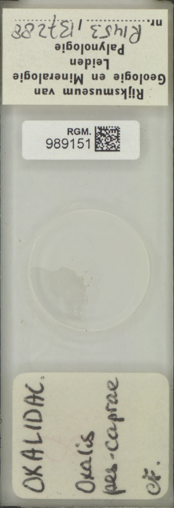 RGM.989151   Oxalis pes-caprae