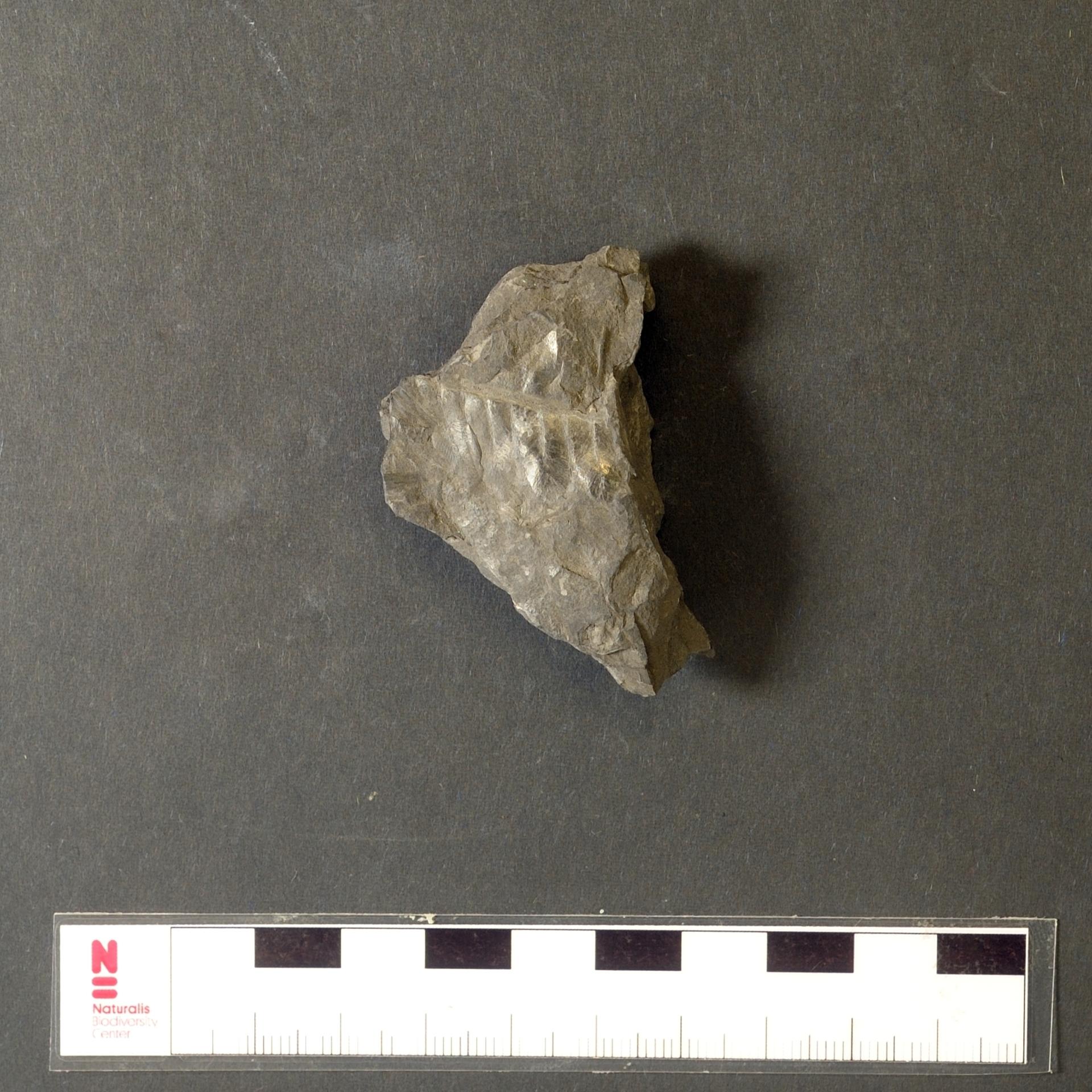 RGM.JMS.46967 | Alethopteris kanisii