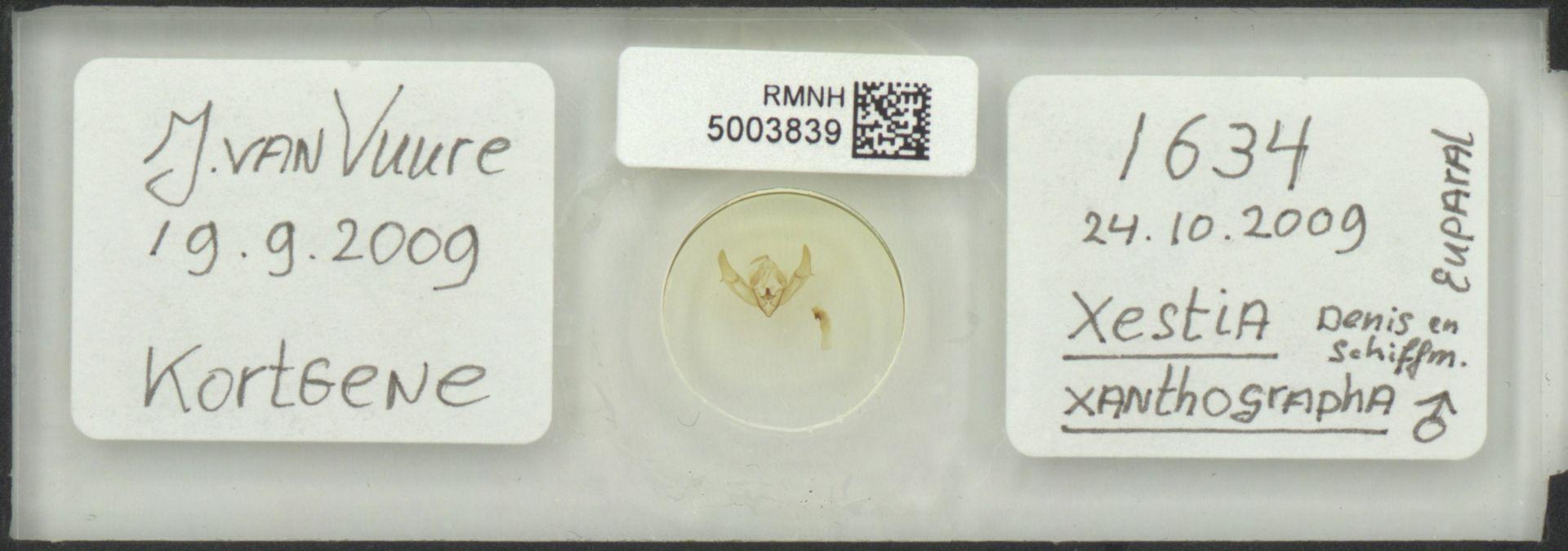 RMNH.5003839   Xestia xanthographa Denis en Schiffm.