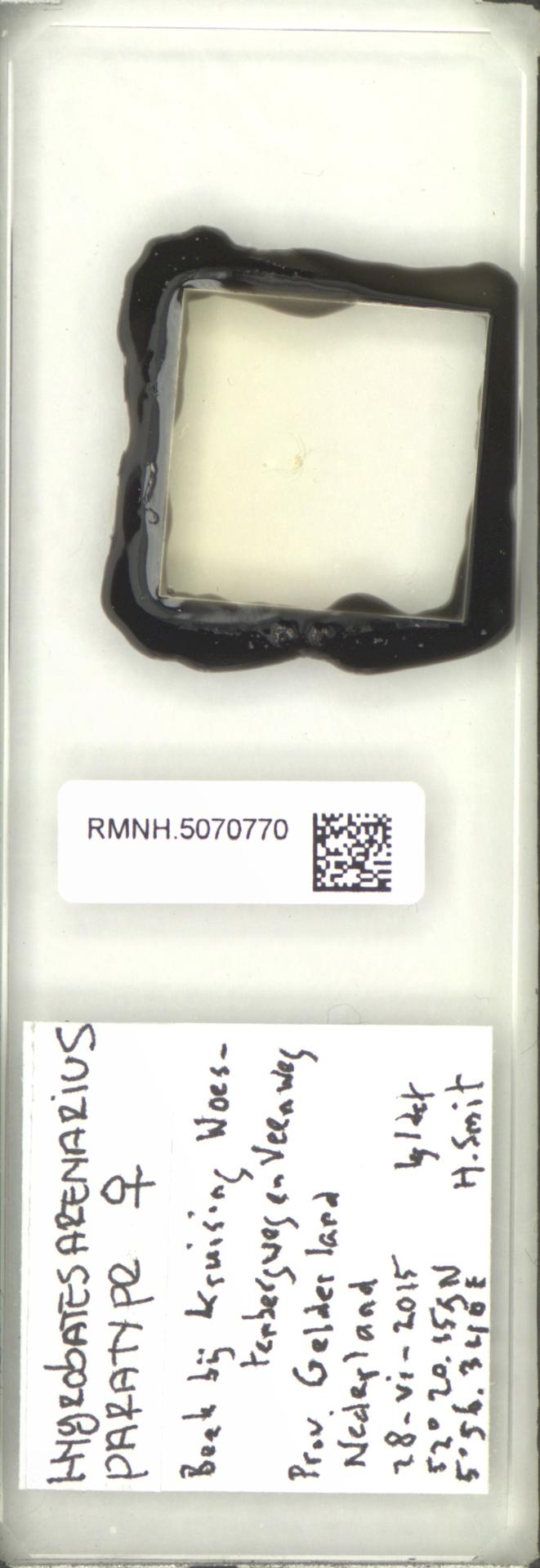 RMNH.5070770 | Hygrobates (Hygrobates) arenarius Smit & Pešić, 2017