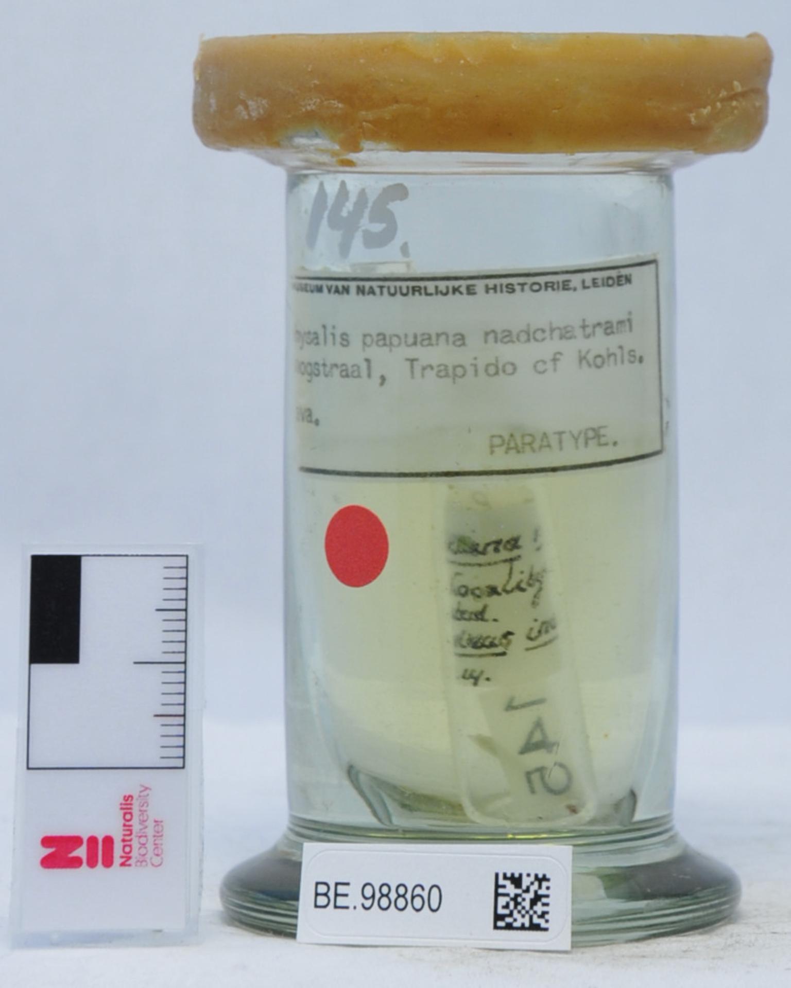 RMNH.ACA.145   Haemaphysalis papuana nadchatrami Hoogstraal, Trapido & Kohls, 1965