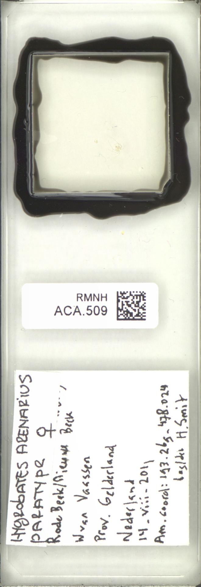 RMNH.ACA.509 | Hygrobates arenarius Smit & Pešić, 2017