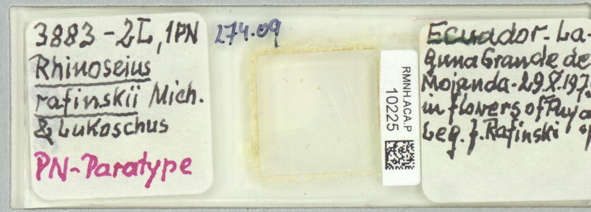 RMNH.ACA.P.10225 | Rhinoseius rafinskii Mich. & Lukoschus