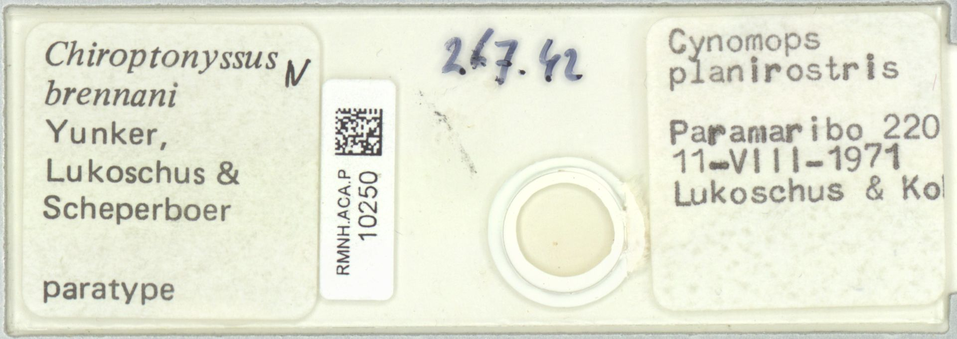 RMNH.ACA.P.10250 | Chiroptonyssus brennani Yunker, Lukoschus & Scheperboer