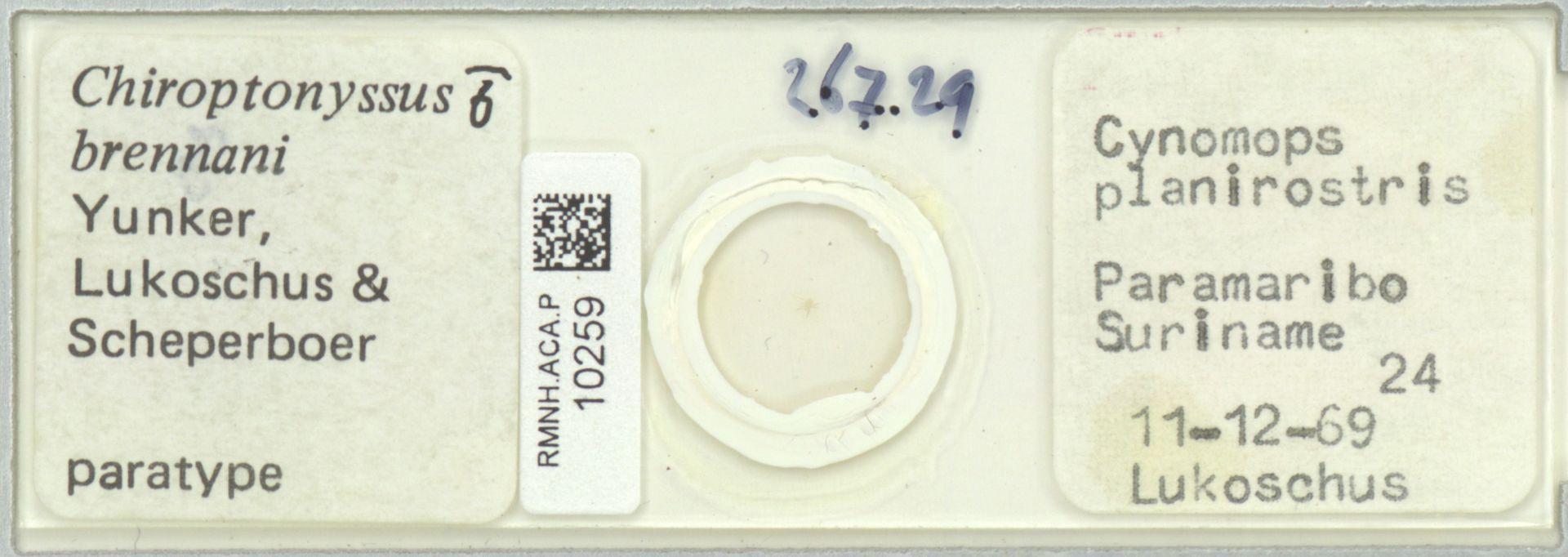 RMNH.ACA.P.10259 | Chiroptonyssus brennani Yunker, Lukoschus & Scheperboer
