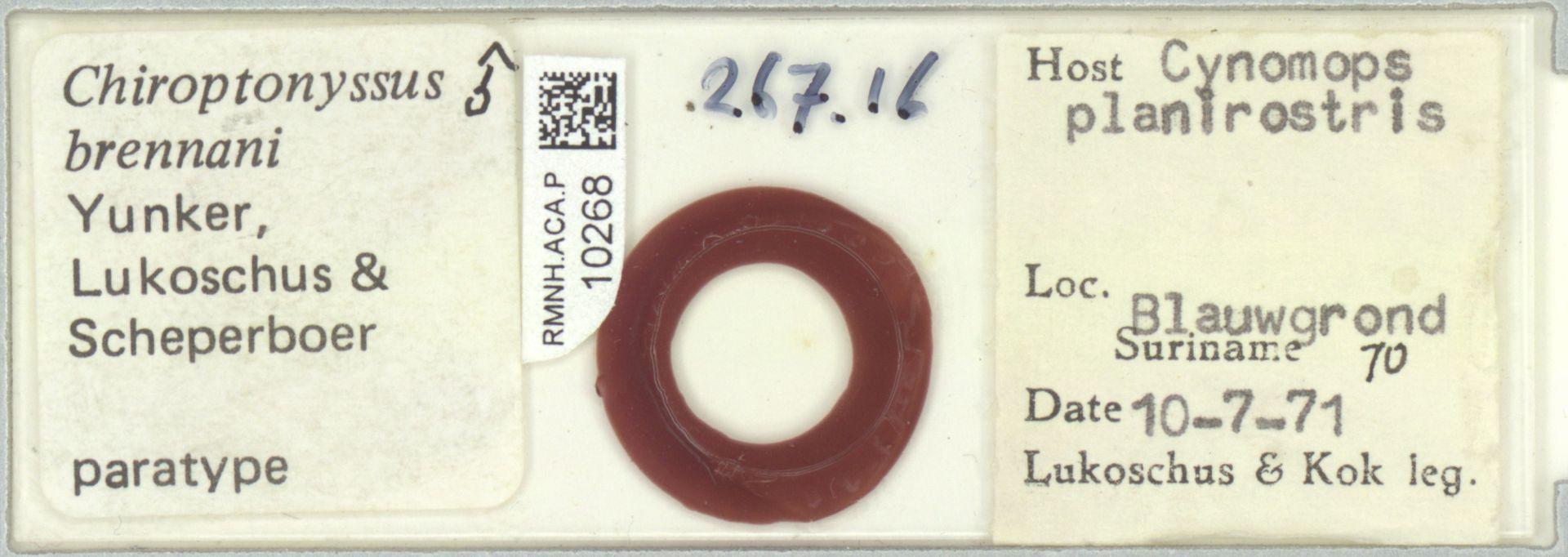 RMNH.ACA.P.10268   Chiroptonyssus brennani Yunker, Lukoschus & Scheperboer