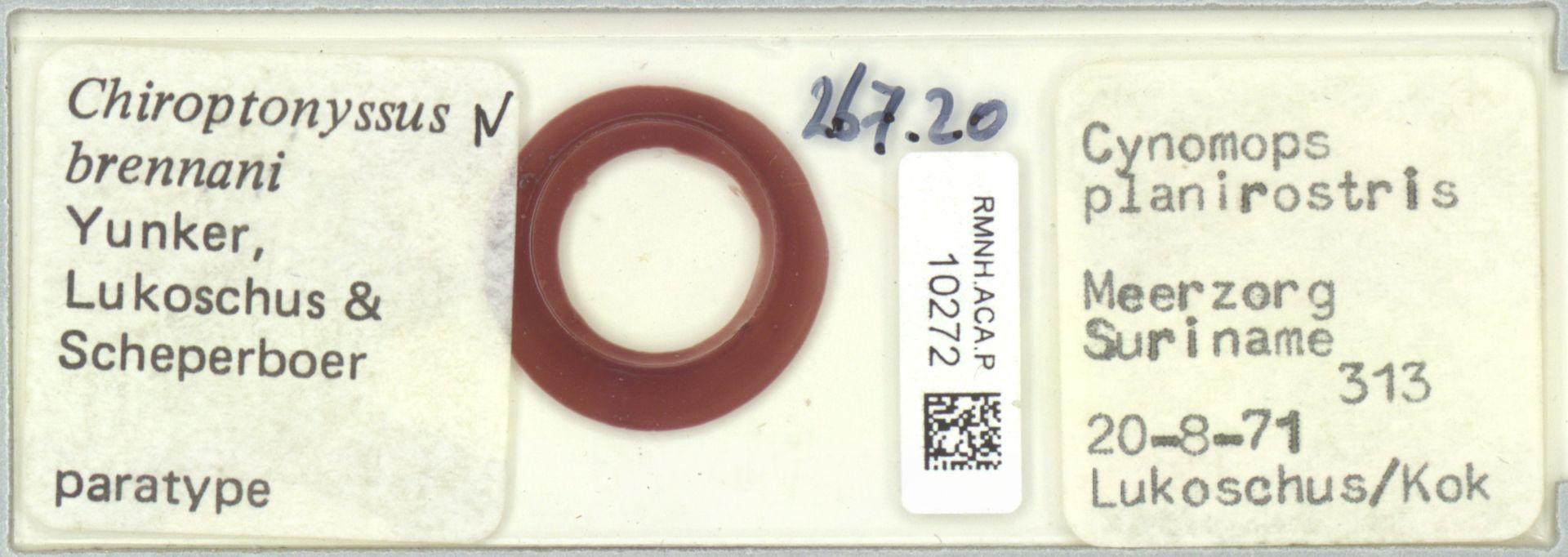 RMNH.ACA.P.10272 | Chiroptonyssus brennani Yunker, Lukoschus & Scheperboer