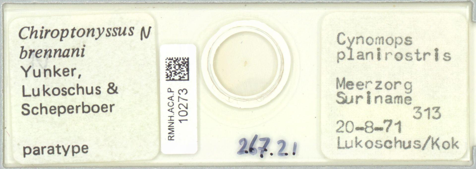 RMNH.ACA.P.10273 | Chiroptonyssus brennani Yunker, Lukoschus & Scheperboer