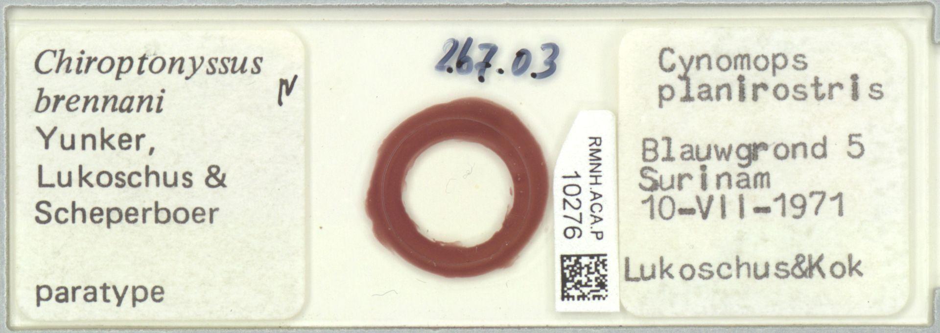 RMNH.ACA.P.10276 | Chiroptonyssus brennani Yunker, Lukoschus & Scheperboer