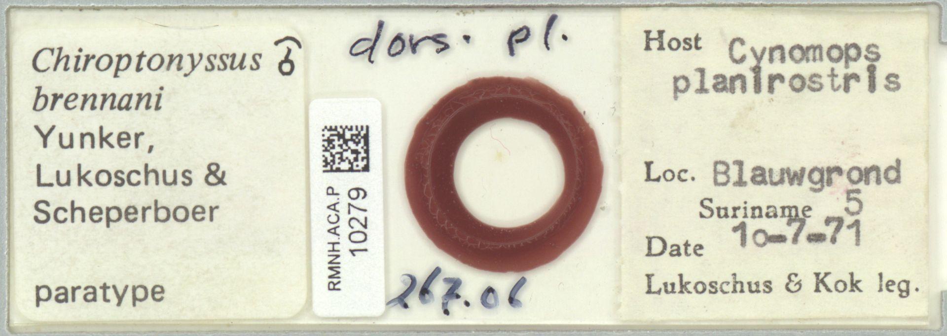 RMNH.ACA.P.10279 | Chiroptonyssus brennani Yunker, Lukoschus & Scheperboer