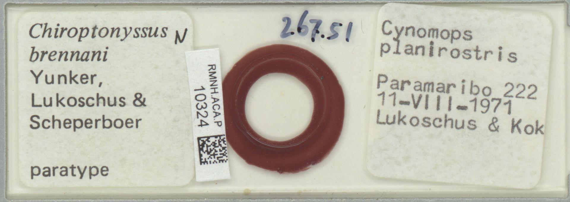 RMNH.ACA.P.10324 | Chiroptonyssus brennani Yunker, Lukoschus & Scheperboer