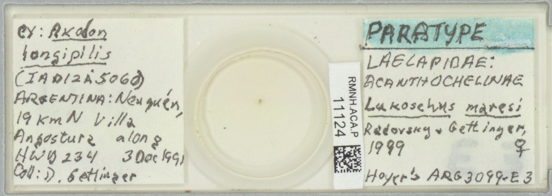RMNH.ACA.P.11124   Lukoschus maresi Radovsky & Gettinger, 1999
