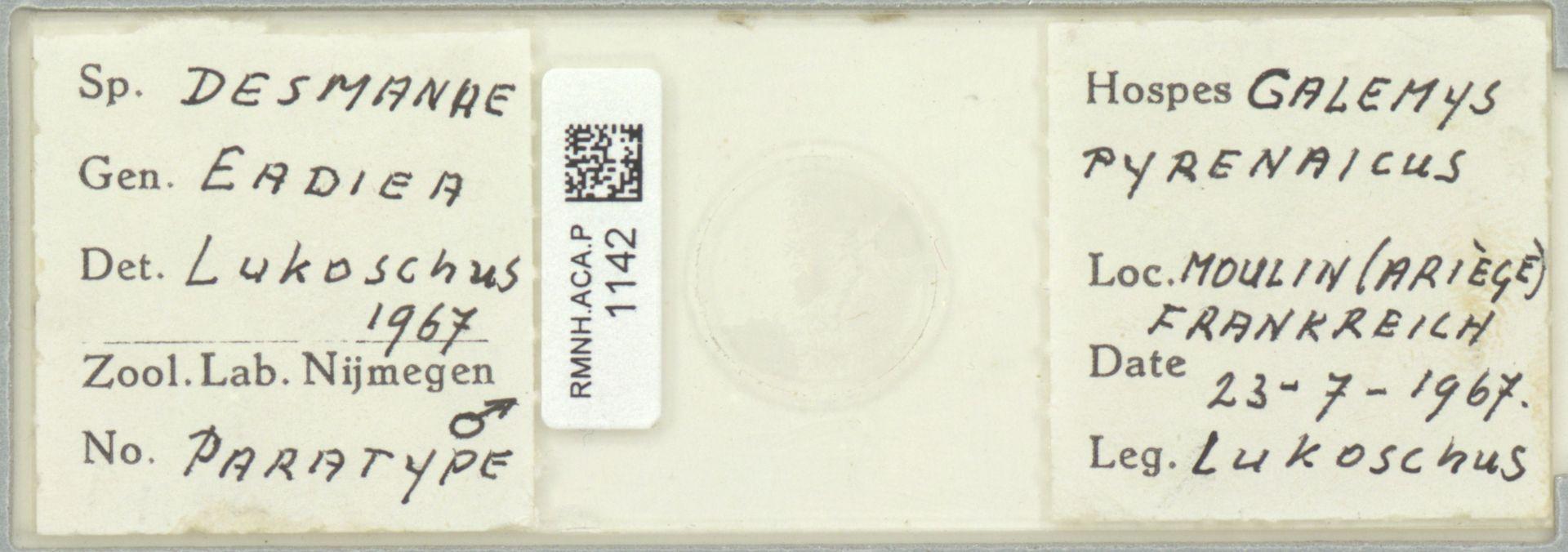 RMNH.ACA.P.1142   Eadiea desmanae Lukoschus
