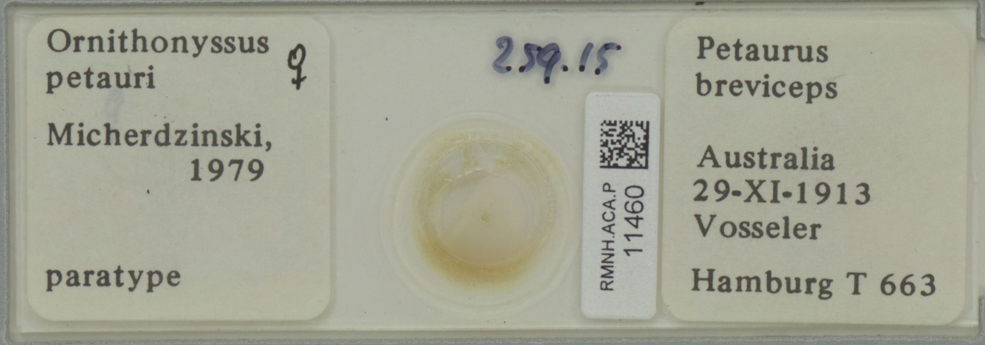RMNH.ACA.P.11460 | Ornithonyssus petauri Micherdzinski, 1979