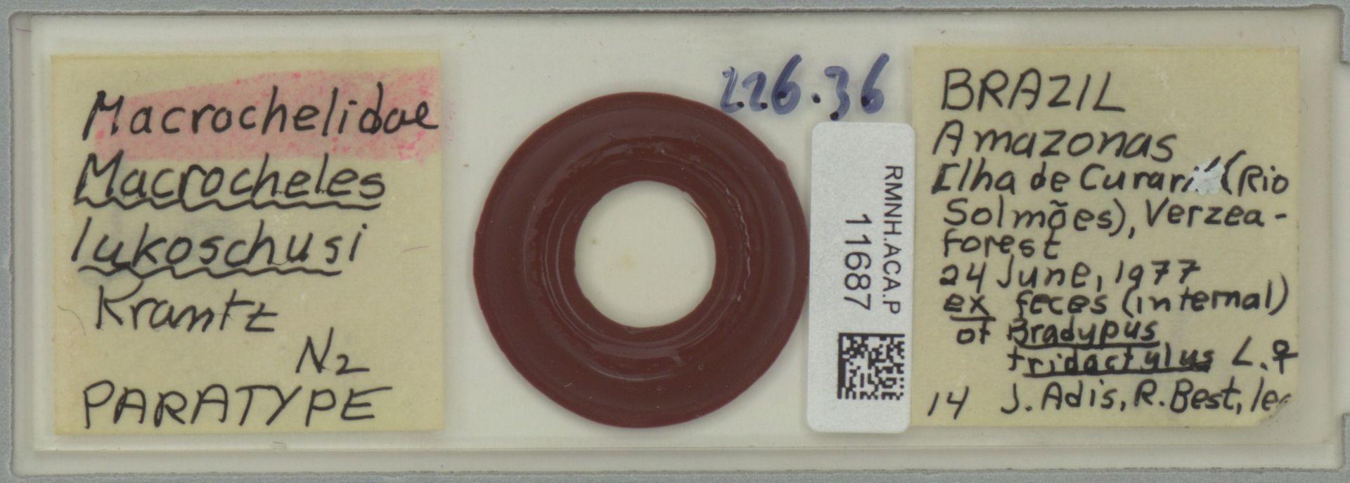RMNH.ACA.P.11687 | Macrocheles lukoschusi Krantz
