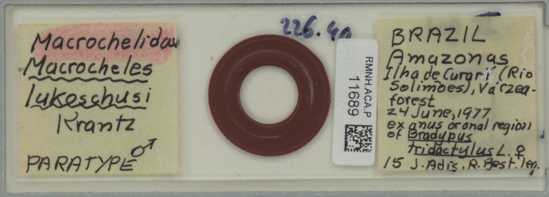 RMNH.ACA.P.11689 | Macrocheles lukoschusi Krantz