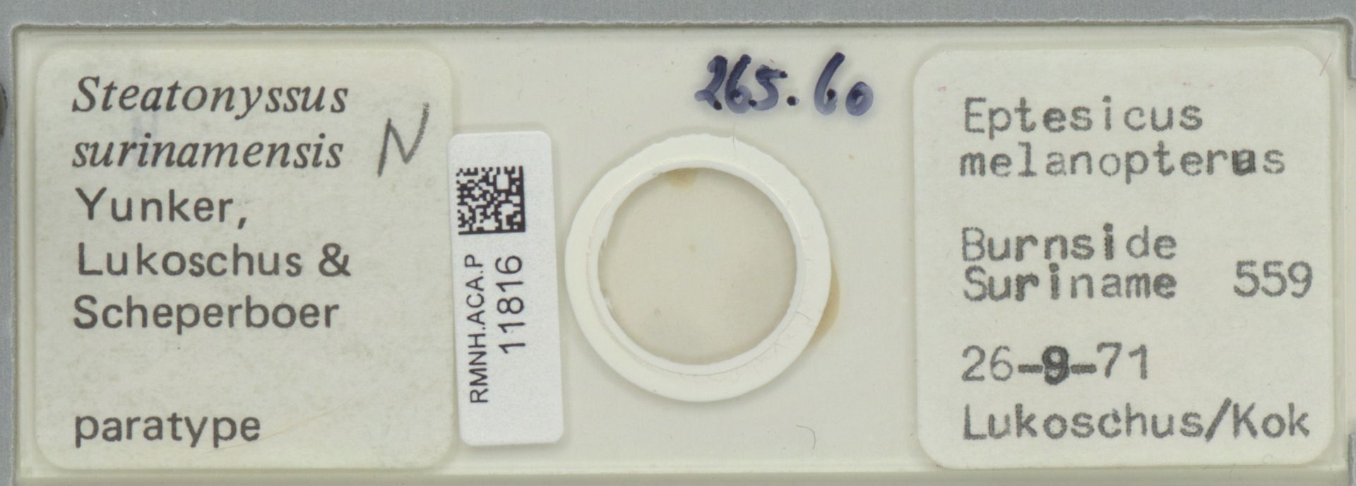 RMNH.ACA.P.11816 | Steatonyssus surinamensis