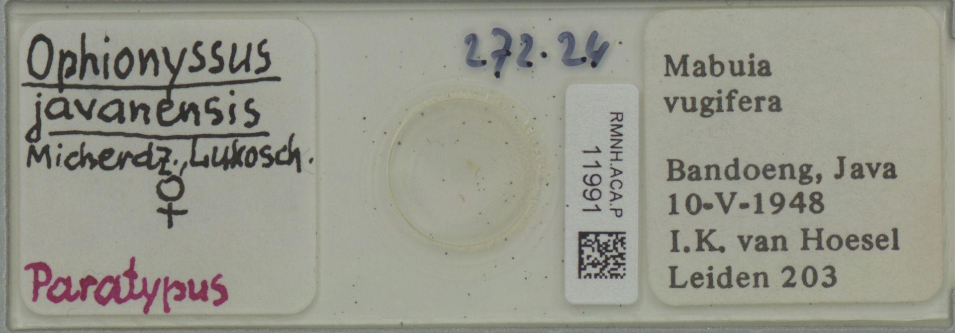 RMNH.ACA.P.11991 | Ophionyssus javanensis Micherdz., Lukosch.