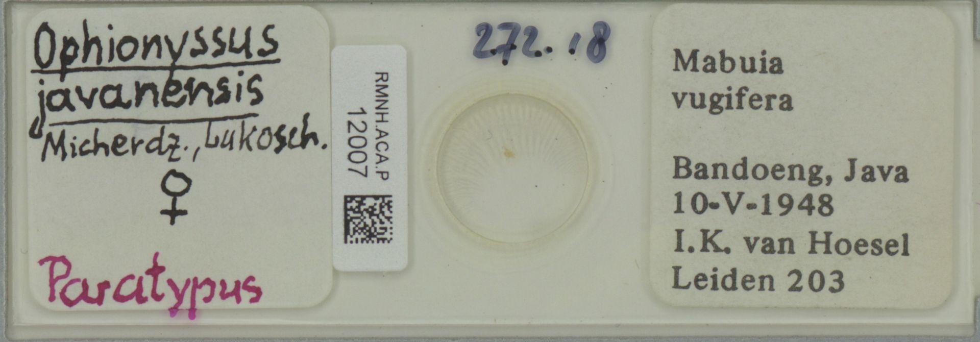 RMNH.ACA.P.12007   Ophionyssus javanensis Micherdz., Lukosch.