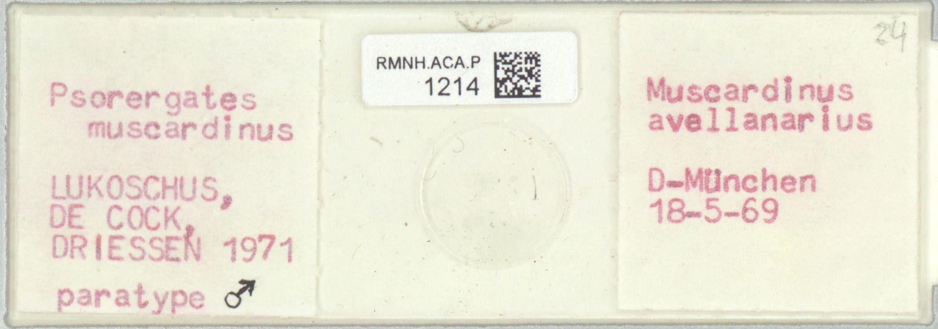 RMNH.ACA.P.1214 | Psorergates muscardinus Kok, Lukoschus & Fain, 1971