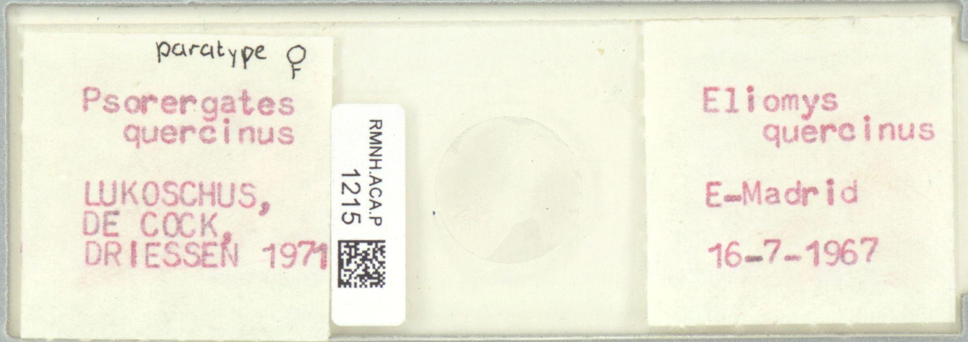 RMNH.ACA.P.1215 | Psorergates quercinus Kok, Lukoschus & Fain, 1971