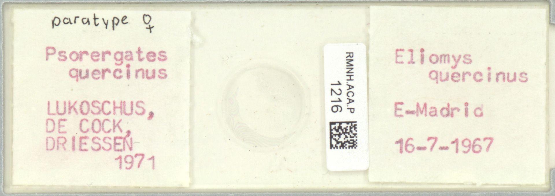 RMNH.ACA.P.1216 | Psorergates quercinus Kok, Lukoschus & Fain, 1971