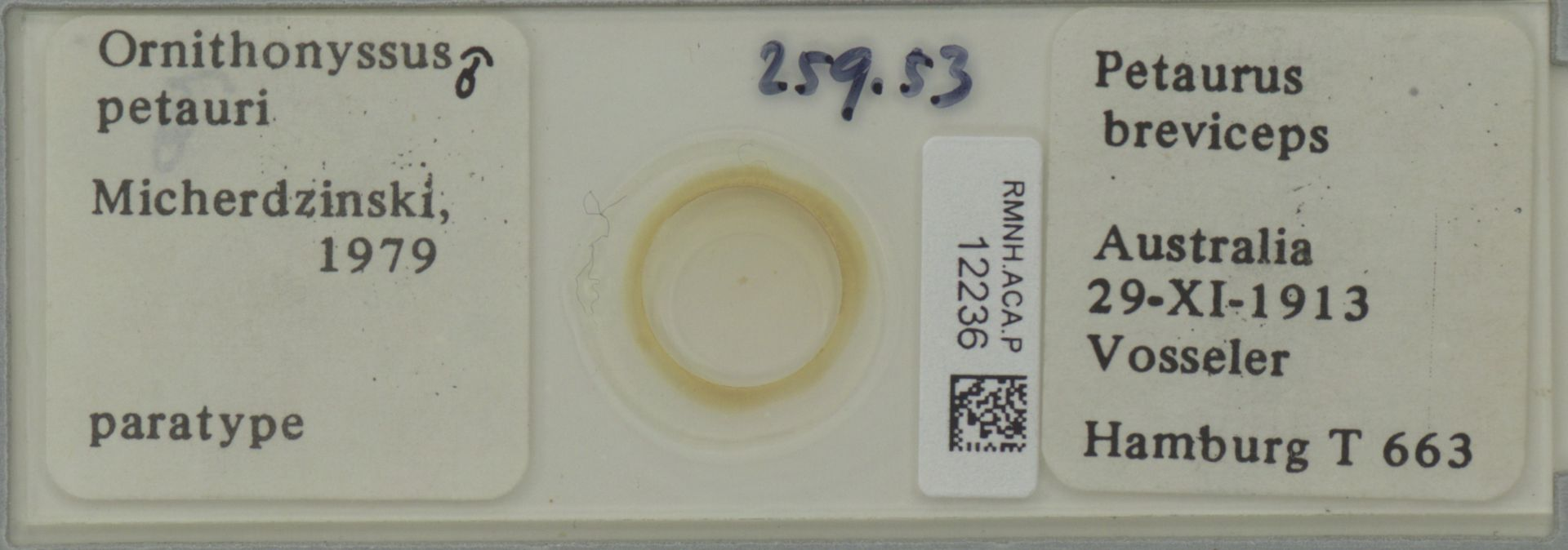 RMNH.ACA.P.12236   Ornithonyssus petauri Micherdzinski, 1979