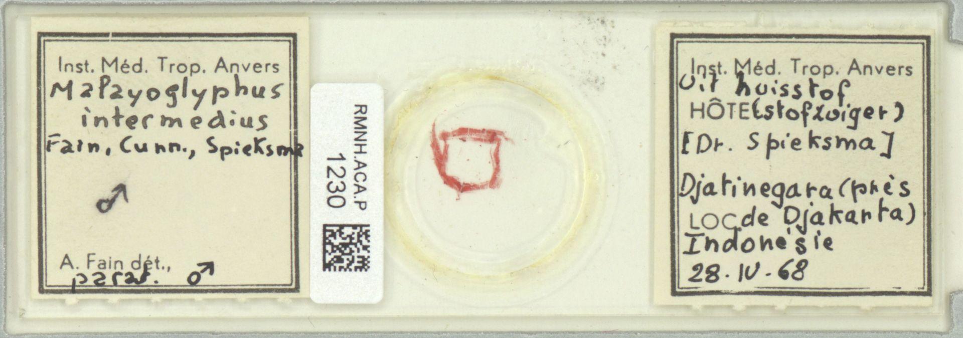 RMNH.ACA.P.1230 | Malayoglyphus intermedius Fain, Cunn., Spieksma