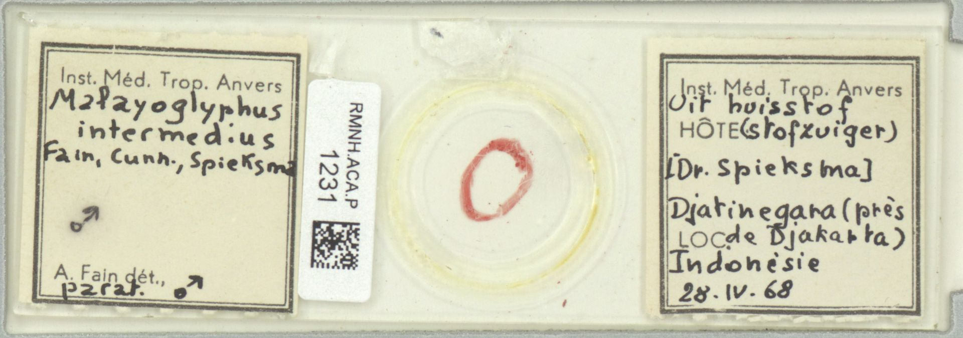 RMNH.ACA.P.1231   Malayoglyphus intermedius Fain, Cunn., Spieksma