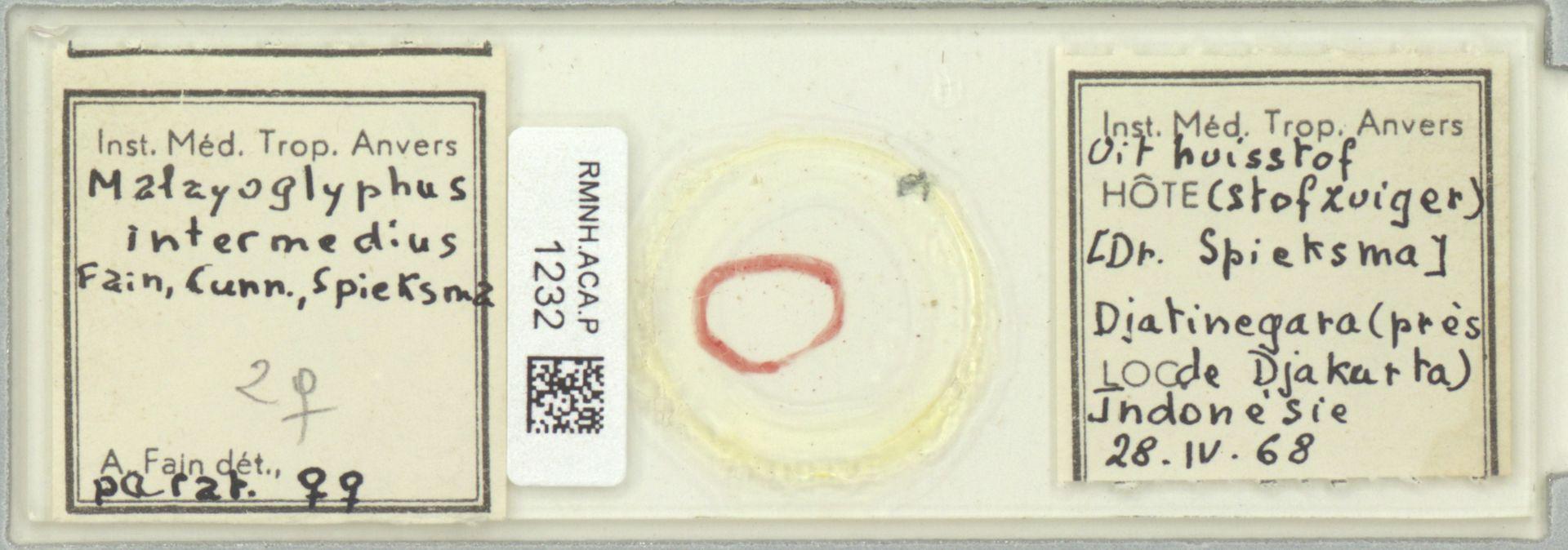 RMNH.ACA.P.1232 | Malayoglyphus intermedius Fain, Cunn., Spieksma