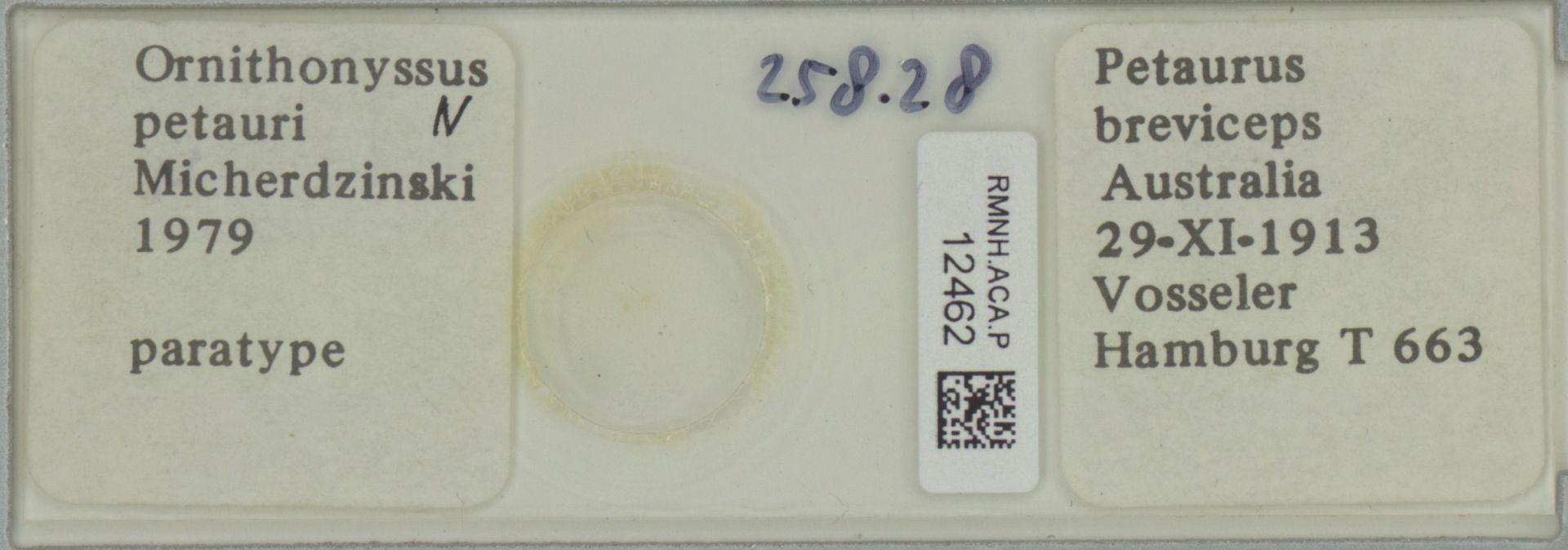RMNH.ACA.P.12462   Ornithonyssus petauri Micherdzinski 1979