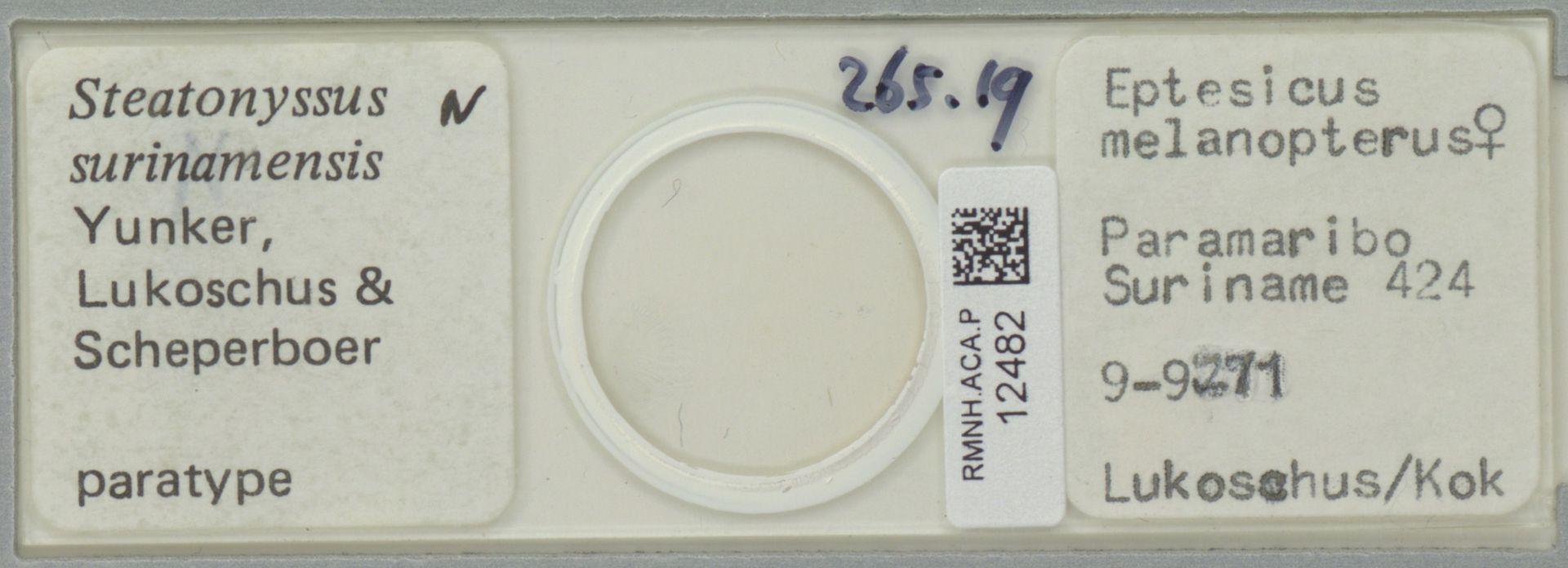 RMNH.ACA.P.12482 | Steatonyssus surinamensis