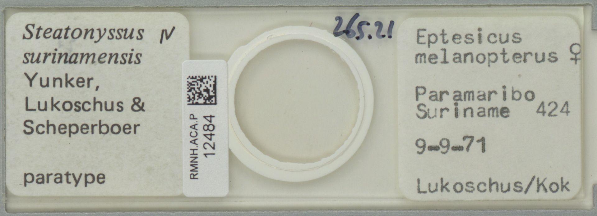 RMNH.ACA.P.12484 | Steatonyssus surinamensis