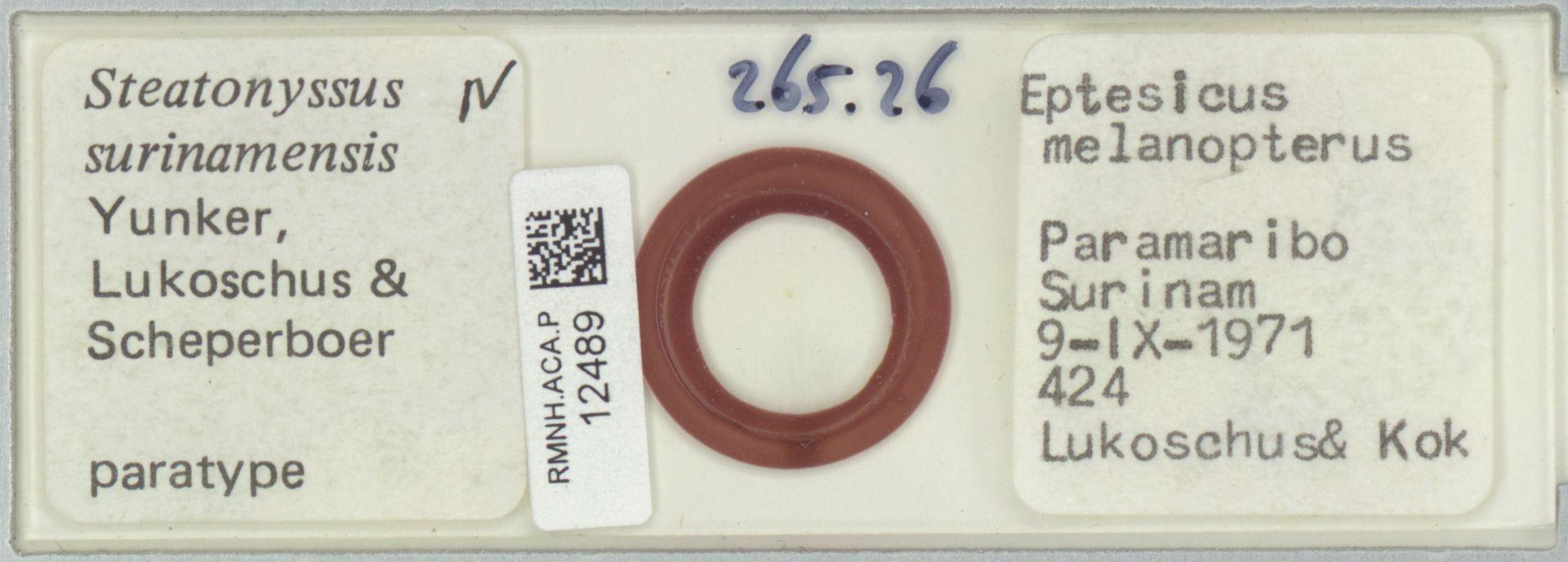 RMNH.ACA.P.12489   Steatonyssus surinamensis