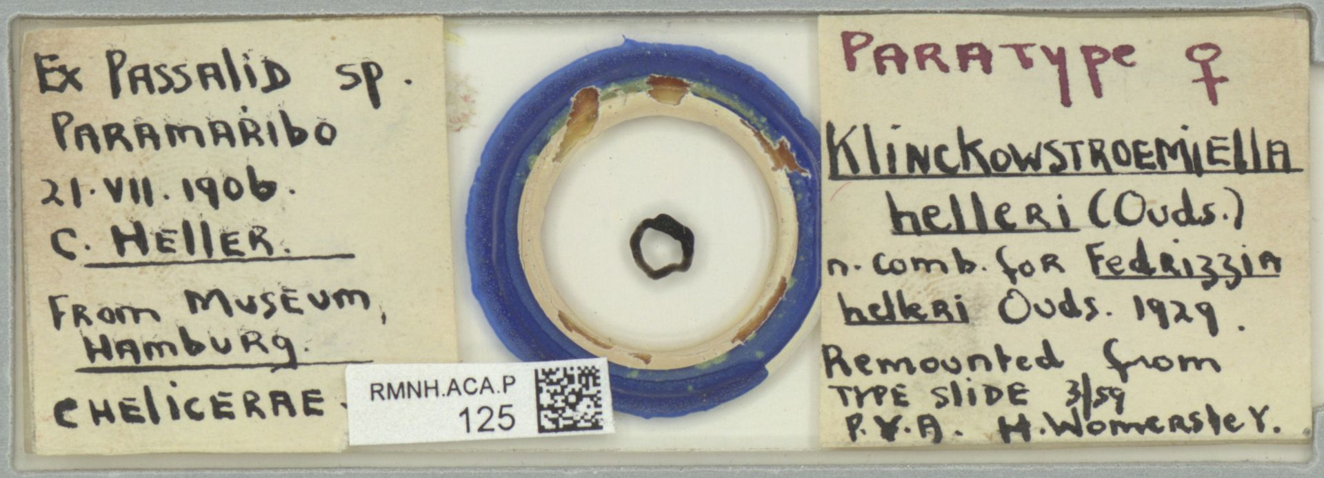 RMNH.ACA.P.125 | Klinckowstroemiella helleri Oudemans