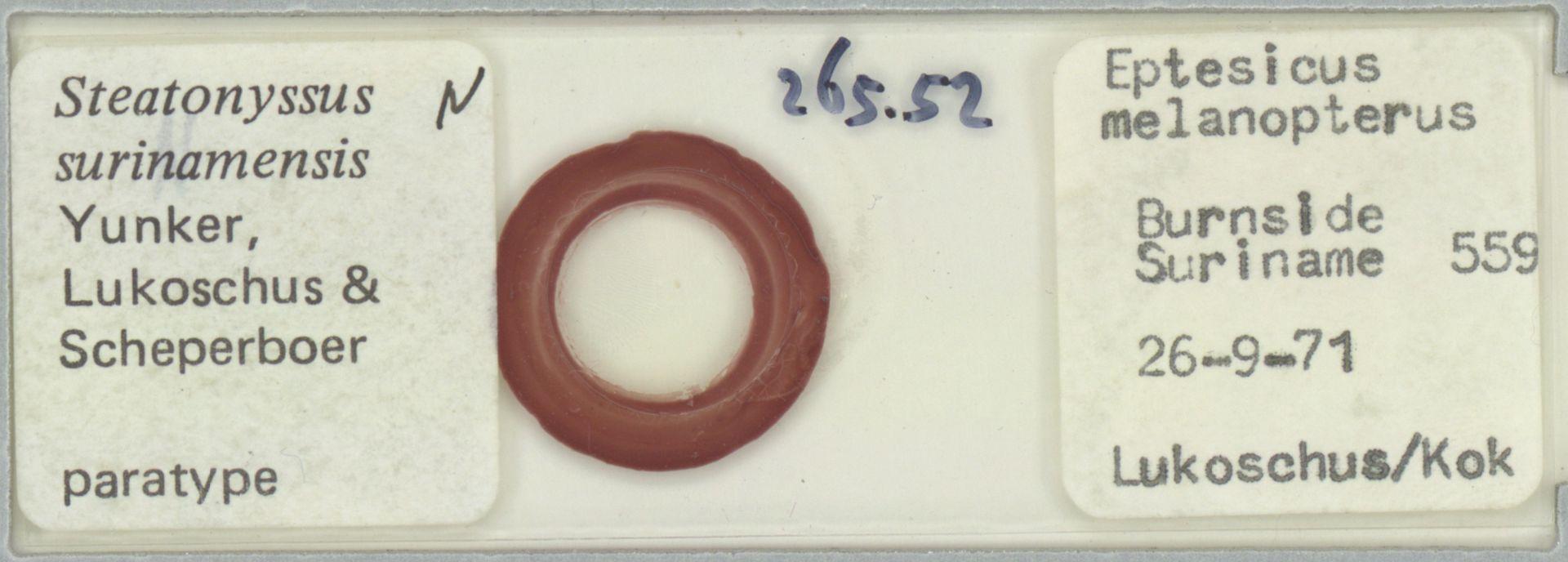 RMNH.ACA.P.12525 | Steatonyssus surinamensis