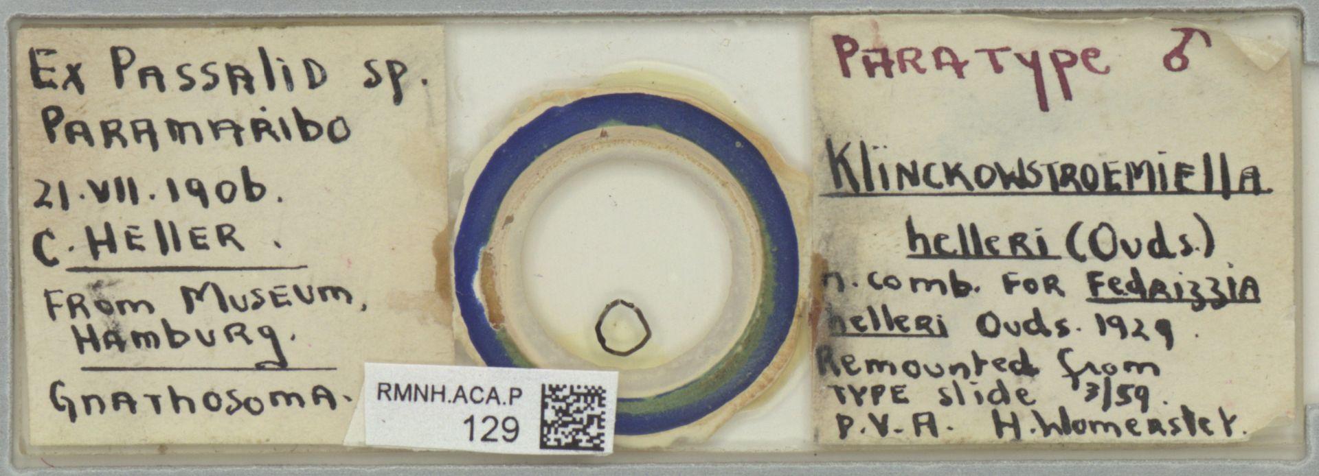 RMNH.ACA.P.129   Klinckowstroemiella helleri Oudemans