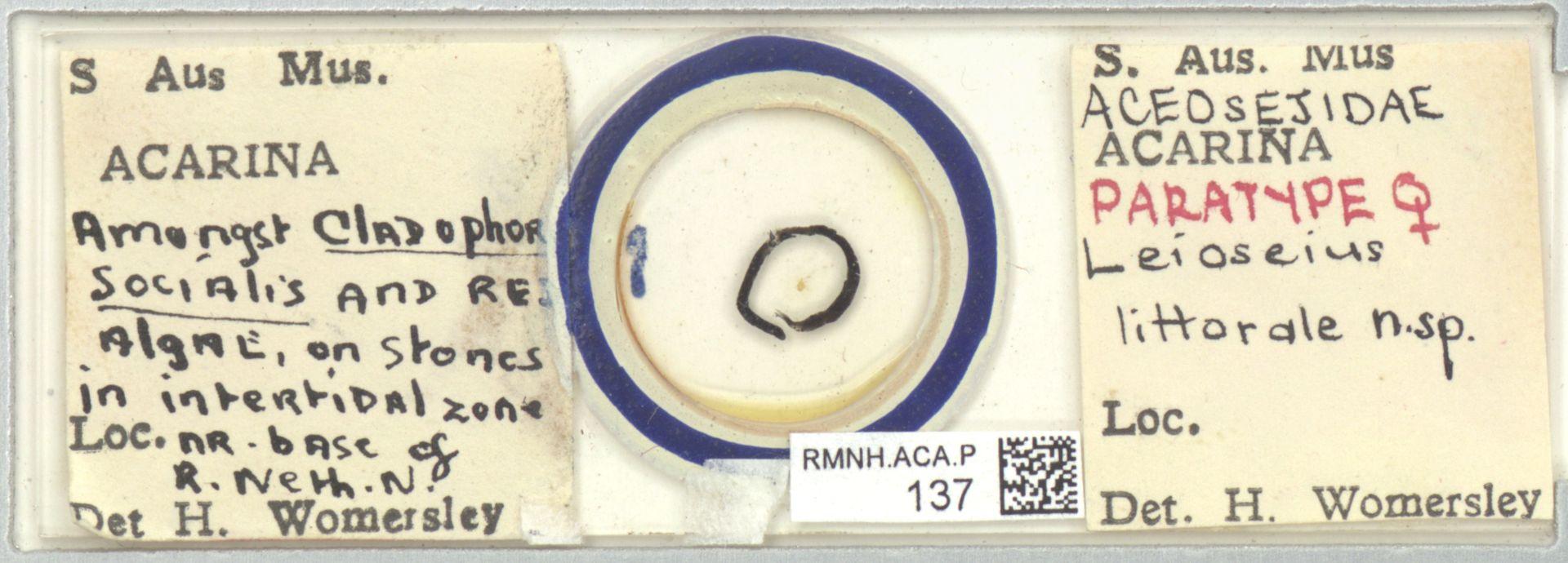 RMNH.ACA.P.137 | Leioseius littorale Womersley