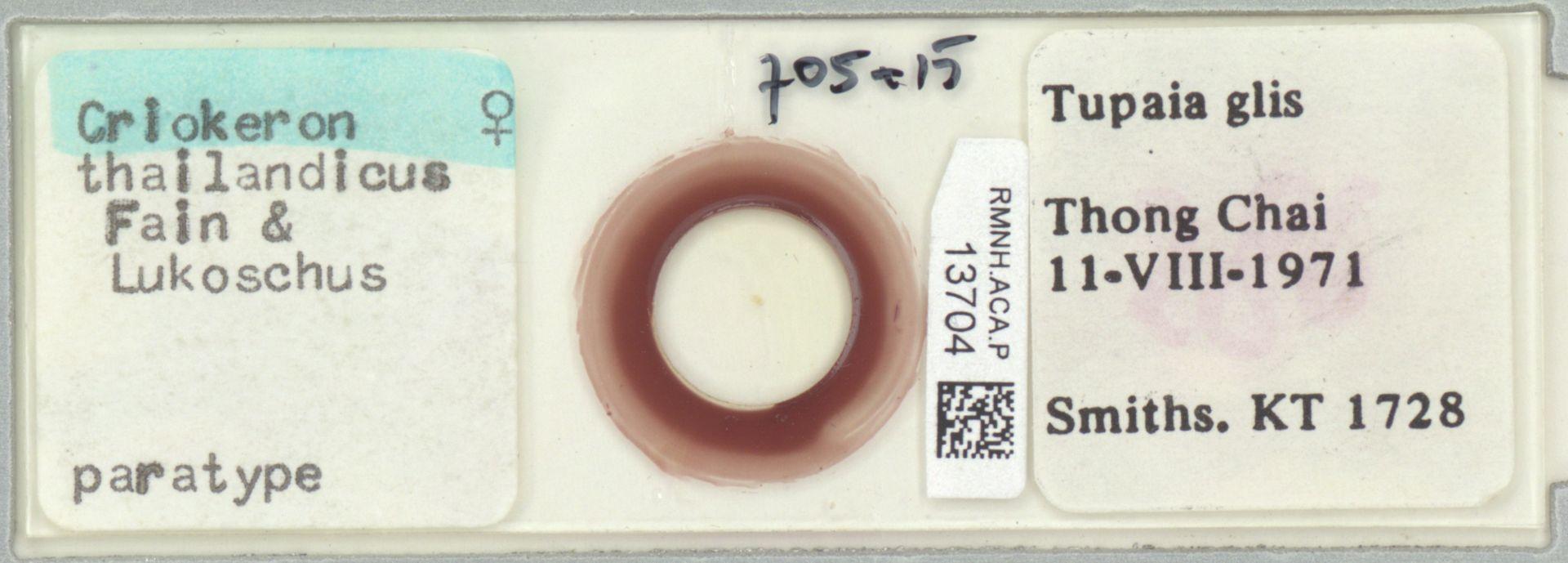 RMNH.ACA.P.13704   Criokeron thailandicus Fain & Lukoschus